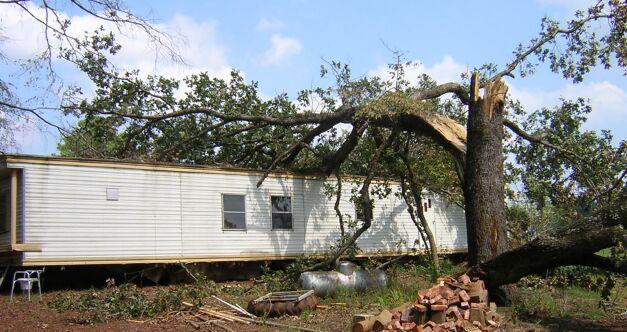 Massive Oak down on the house.