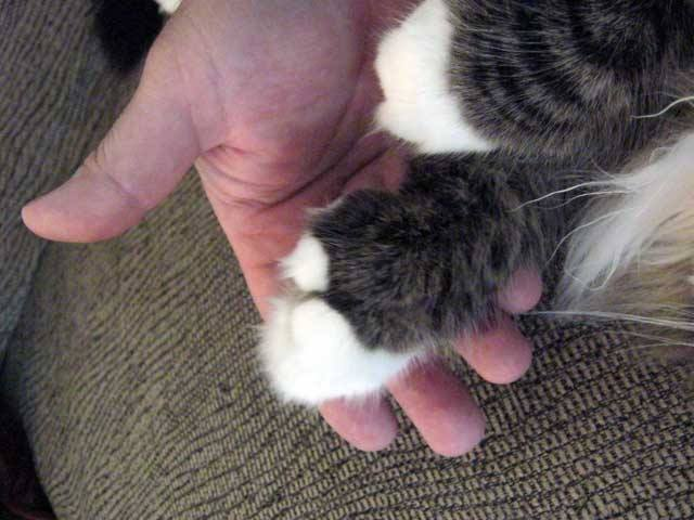 A Pierre paw. He was a massive cat.