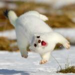 Damn rabid weasels…