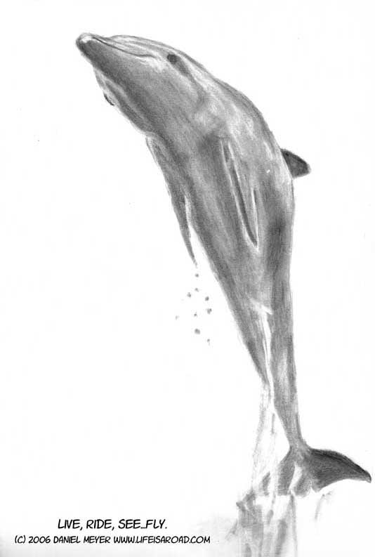 Pencil drawing of leaping dolphin
